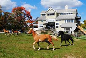Dream Horse Guesthouse Auction